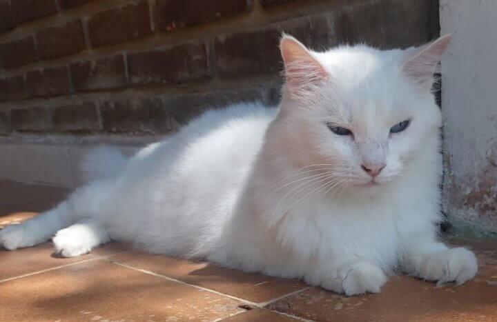 gato perdido é encontrado após 5 meses - bia